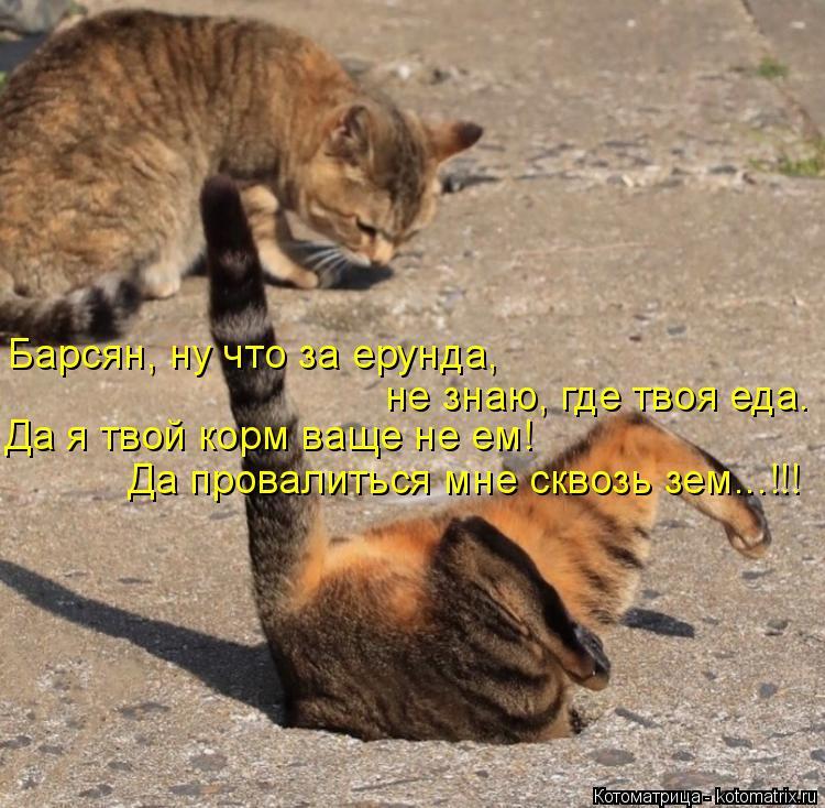 Котоматрица: Барсян, ну что за ерунда,  не знаю, где твоя еда. Да я твой корм ваще не ем! Да провалиться мне сквозь зем...!!!
