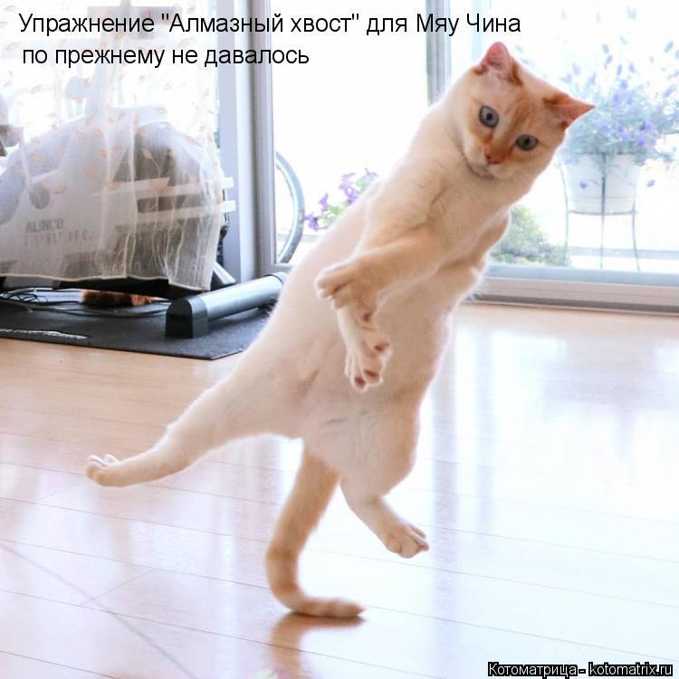 """Котоматрица: Упражнение """"Алмазный хвост"""" для Мяу Чина по прежнему не давалось"""