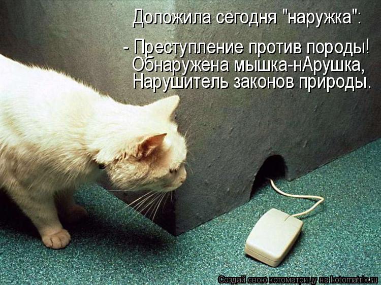 """Котоматрица: Доложила сегодня """"наружка"""": - Преступление против породы! Обнаружена мышка-нАрушка, Нарушитель законов природы."""