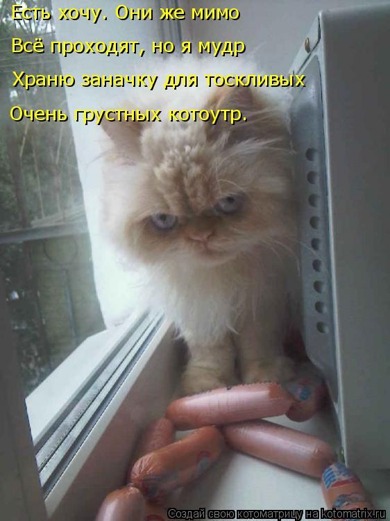 Котоматрица: Есть хочу. Они же мимо Всё проходят, но я мудр Храню заначку для тоскливых Очень грустных котоутр.