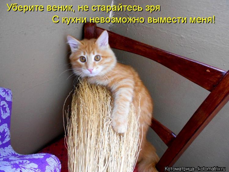 Котоматрица: Уберите веник, не старайтесь зря С кухни невозможно вымести меня!
