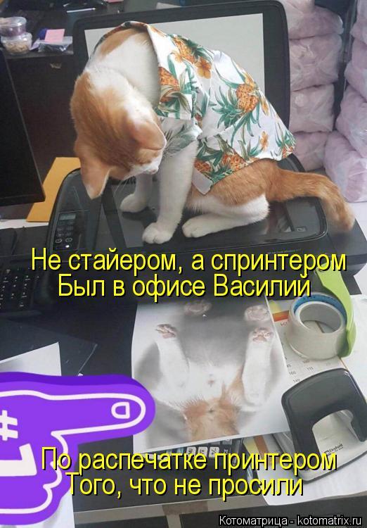 Котоматрица: Не стайером, а спринтером Был в офисе Василий По распечатке принтером Того, что не просили