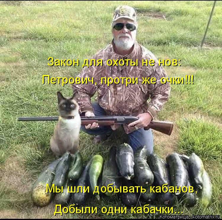 Котоматрица: Закон для охоты не нов: Петрович, протри же очки!!! Мы шли добывать кабанов, Добыли одни кабачки...