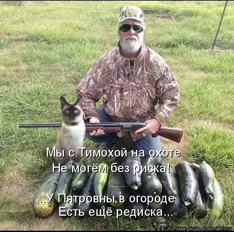 Котоматрица: Мы с Тимохой на охоте Не могём без риска! ...У Пятровны в огороде Есть ещё редиска...