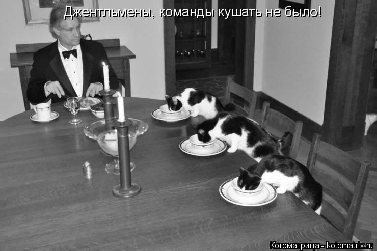 Котоматрица: Джентльмены, команды кушать не было!