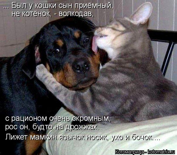 Котоматрица: ... Был у кошки сын приёмный,  не котёнок, - волкодав, с рационом очень скромным,  рос он, будто на дрожжах. Лижет мамкин язычок носик, ухо и бочо?