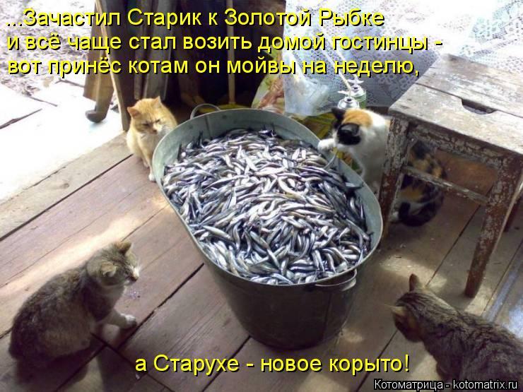 Котоматрица: ...Зачастил Старик к Золотой Рыбке и всё чаще стал возить домой гостинцы - вот принёс котам он мойвы на неделю, а Старухе - новое корыто!