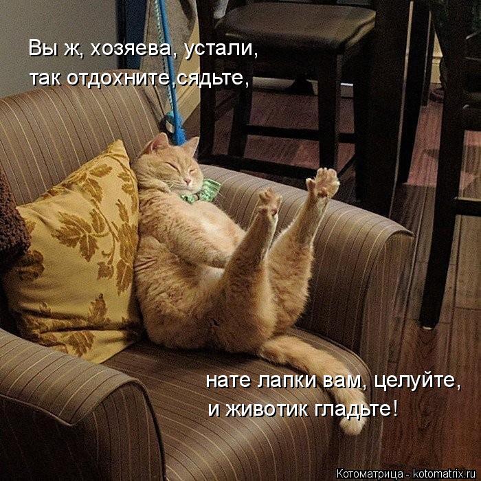 Котоматрица: Вы ж, хозяева, устали,  так отдохните,сядьте,  нате лапки вам, целуйте,  и животик гладьте!
