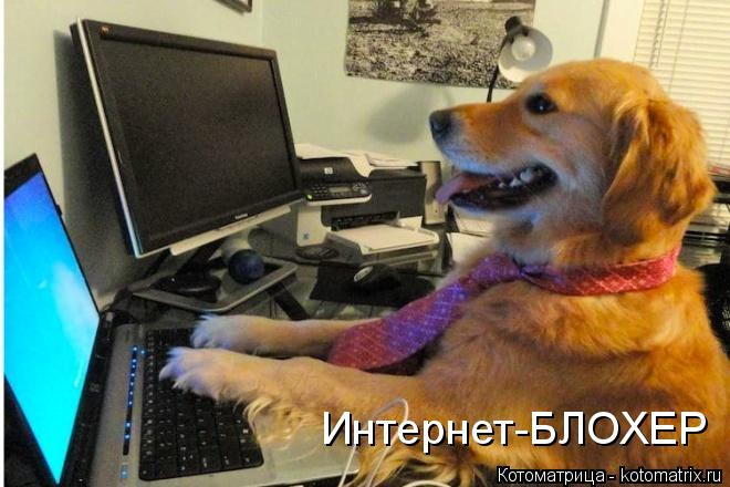 Котоматрица: Интернет-БЛОХЕР