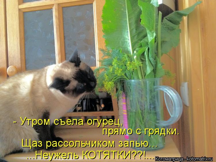 Котоматрица: - Утром съела огурец, прямо с грядки. Щаз рассольчиком запью... ...Неужель КОТЯТКИ??!...