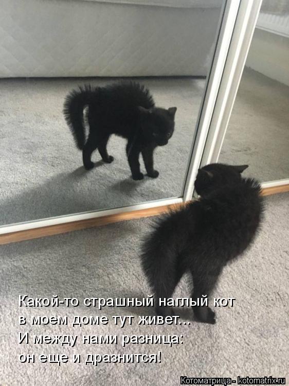 Котоматрица: Какой-то страшный наглый кот в моем доме тут живет... И между нами разница: он еще и дразнится!