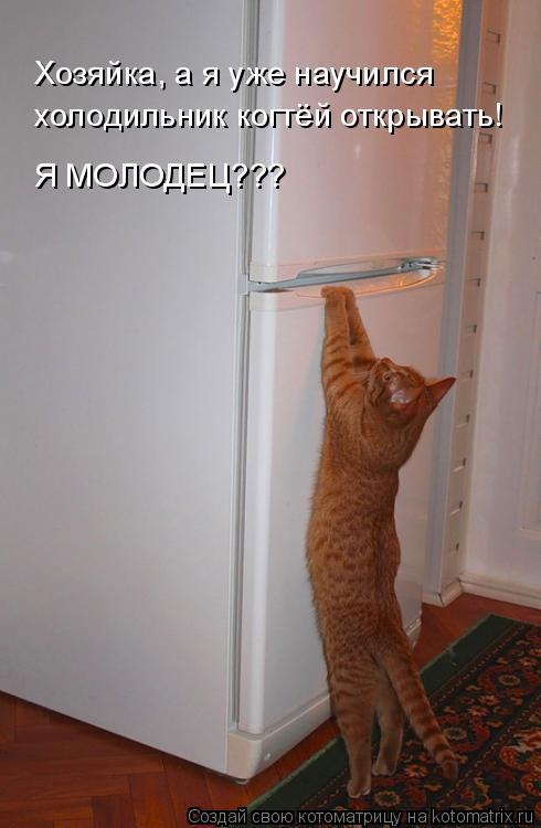 Котоматрица: Хозяйка, а я уже научился  холодильник когтёй открывать! Я МОЛОДЕЦ???
