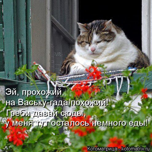 Котоматрица: Эй, прохожий, на Ваську-гада похожий! Греби давай сюды, у меня тут осталось немного еды!