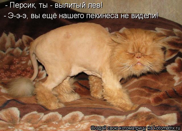 Котоматрица: - Персик, ты - вылитый лев! - Э-э-э, вы ещё нашего пекинеса не видели!