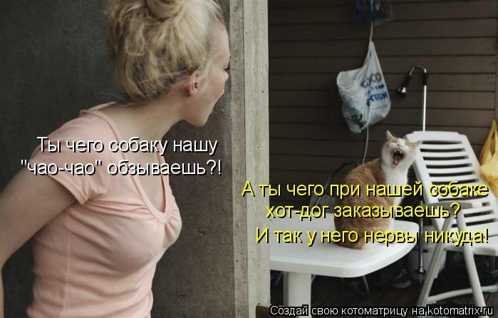 """Котоматрица: И так у него нервы никуда! Ты чего собаку нашу """"чао-чао"""" обзываешь?! А ты чего при нашей собаке хот-дог заказываешь?"""