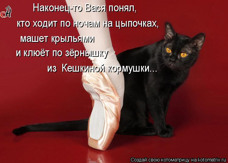 Котоматрица: Наконец-то Вася понял, кто ходит по ночам на цыпочках, машет крыльями и клюёт по зёрнышку из  Кешкиной кормушки...