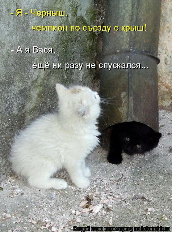 Котоматрица: - Я - Черныш,  чемпион по съезду с крыш! - А я Вася, ещё ни разу не спускался...