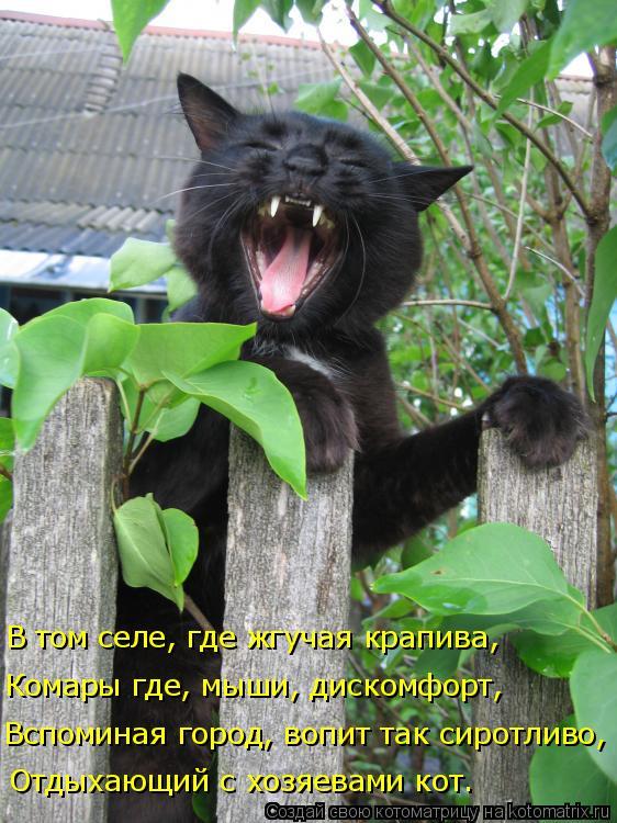 Котоматрица: Отдыхающий с хозяевами кот. Вспоминая город, вопит так сиротливо, Комары где, мыши, дискомфорт, В том селе, где жгучая крапива,