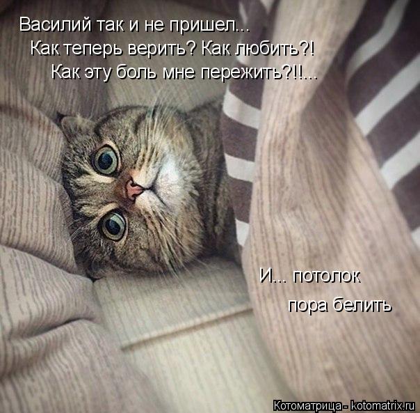 Котоматрица: Василий так и не пришел... Как теперь верить? Как любить?! Как эту боль мне пережить?!!... И... потолок пора белить