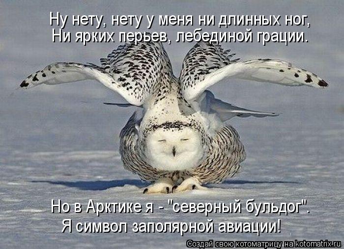 """Котоматрица: Ну нету, нету у меня ни длинных ног, Ни ярких перьев, лебединой грации. Но в Арктике я - """"северный бульдог"""". Я символ заполярной авиации!"""