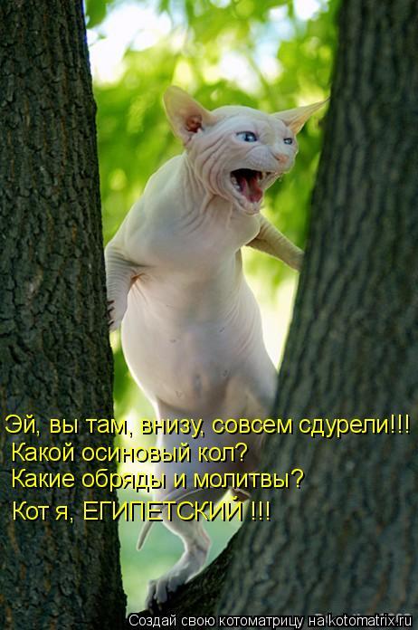 Котоматрица: Эй, вы там, внизу, совсем сдурели!!! Какой осиновый кол?  Какие обряды и молитвы? Кот я, ЕГИПЕТСКИЙ !!!
