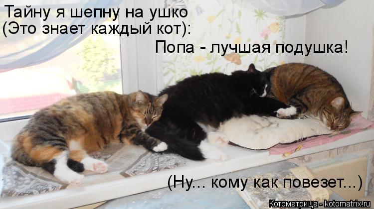 Котоматрица: Тайну я шепну на ушко (Это знает каждый кот): Попа - лучшая подушка! (Ну... кому как повезет...)