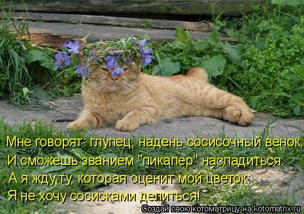 """Котоматрица: Мне говорят: глупец, надень сосисочный венок,  И сможешь званием """"пикапер"""" насладиться.  А я жду ту, которая оценит мой цветок: Я не хочу сосис?"""