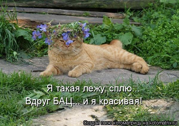 Котоматрица: Я такая лежу, сплю... Вдруг БАЦ... и я красивая!
