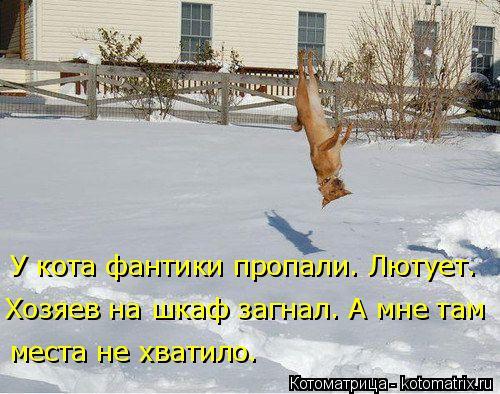 Котоматрица: У кота фантики пропали. Лютует. Хозяев на шкаф загнал. А мне там  места не хватило.