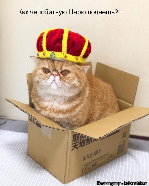 Котоматрица: Как челобитную Царю подаешь?