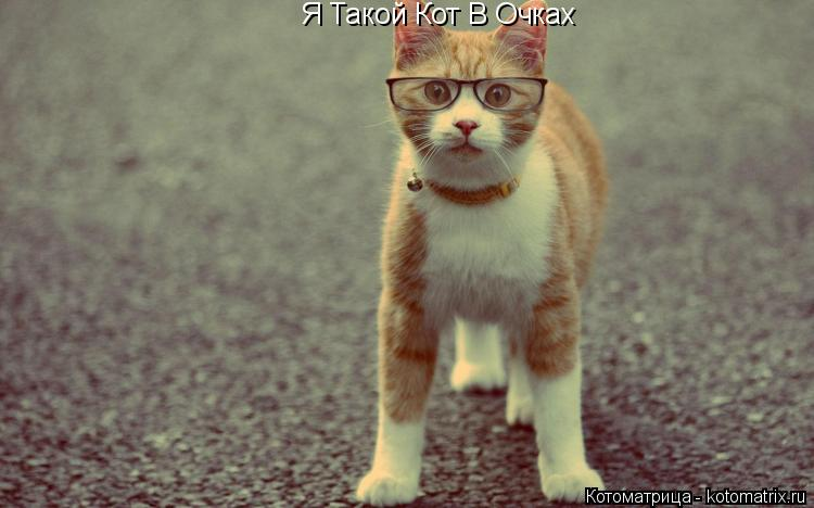 Котоматрица: Я Такой Кот В Очках