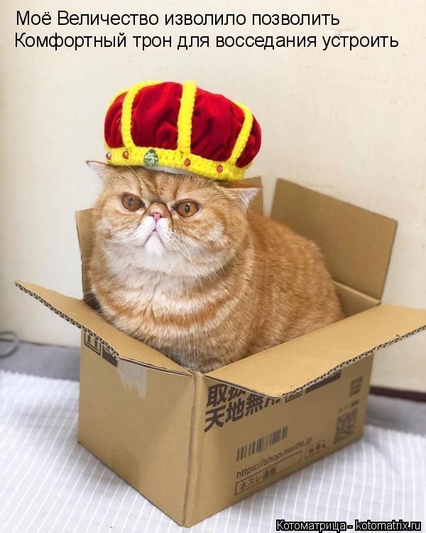 Котоматрица: Моё Величество изволило позволить Комфортный трон для восседания устроить