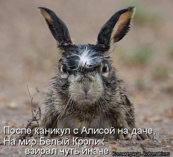 Котоматрица: После каникул с Алисой на даче,  На мир Белый Кролик  взирал чуть иначе.
