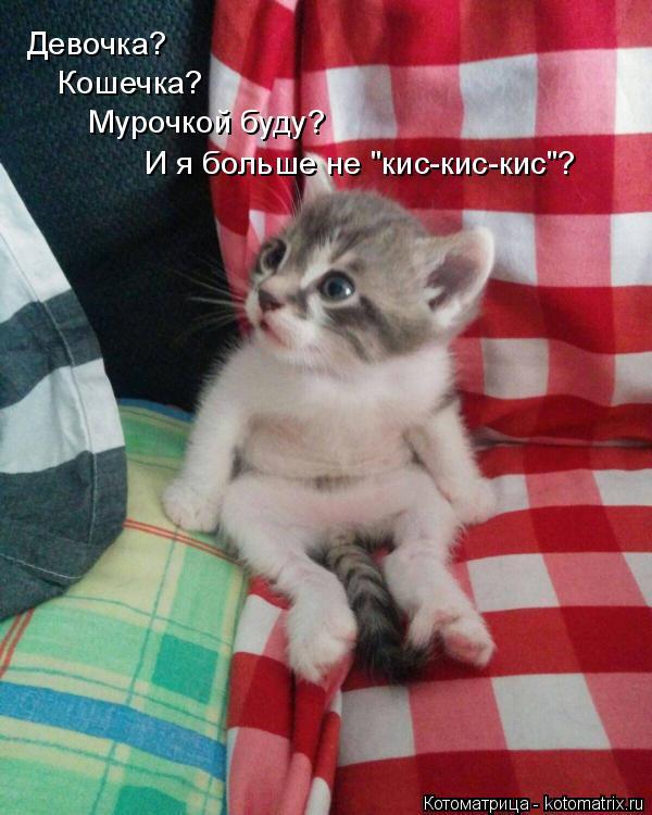 """Котоматрица: Девочка? Кошечка? Мурочкой буду? И я больше не """"кис-кис-кис""""?"""