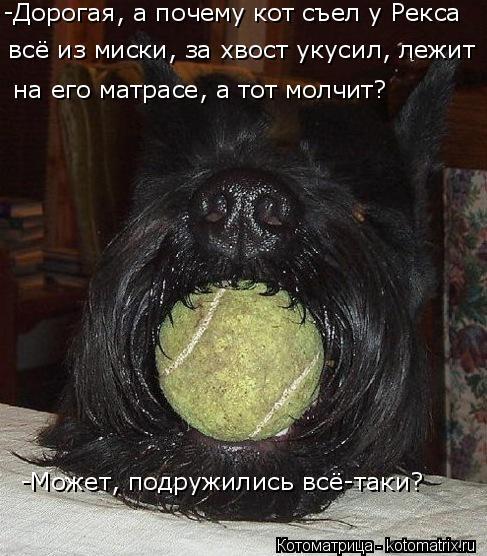 Котоматрица: -Может, подружились всё-таки? -Дорогая, а почему кот съел у Рекса  всё из миски, за хвост укусил, лежит на его матрасе, а тот молчит?