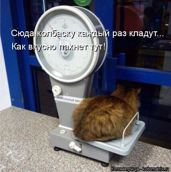 Котоматрица: Сюда колбаску каждый раз кладут... Как вкусно пахнет тут!