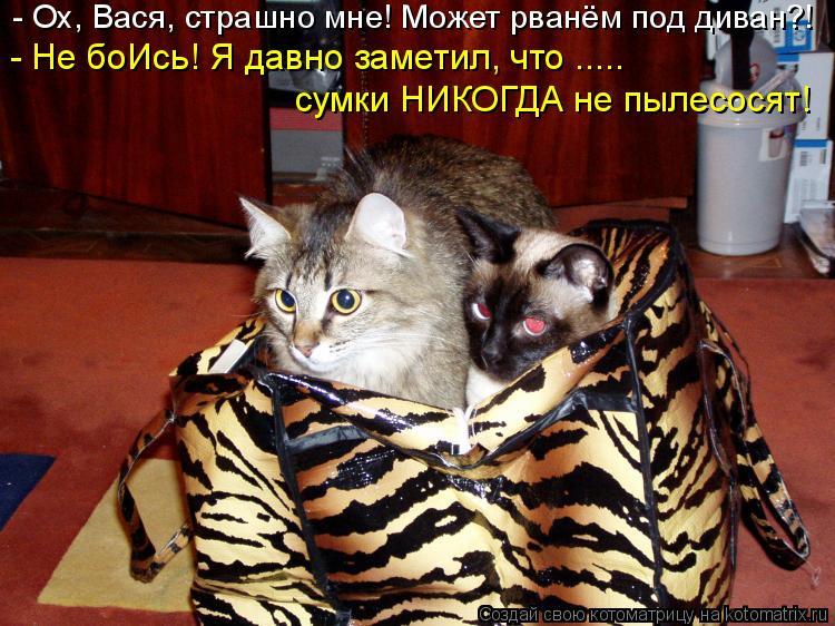 Котоматрица: - Ох, Вася, страшно мне! Может рванём под диван?! - Не боИсь! Я давно заметил, что ..... сумки НИКОГДА не пылесосят!