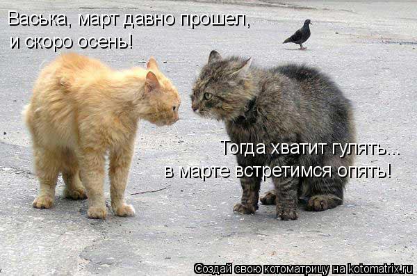 Котоматрица: Васька, март давно прошел,  и скоро осень! Тогда хватит гулять... в марте встретимся опять!