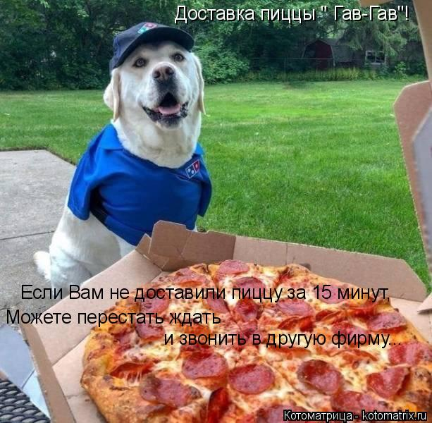 """Котоматрица: Доставка пиццы """" Гав-Гав""""!  Если Вам не доставили пиццу за 15 минут, Можете перестать ждать  и звонить в другую фирму..."""