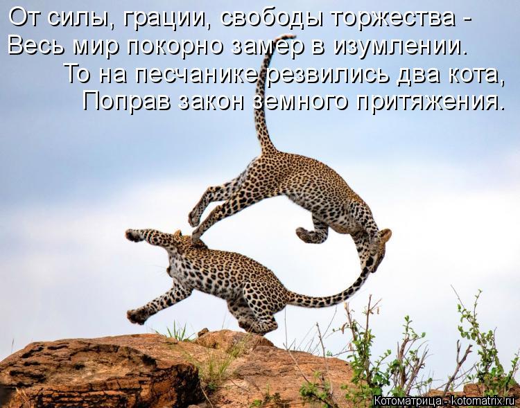 Котоматрица: От силы, грации, свободы торжества - Весь мир покорно замер в изумлении. То на песчанике резвились два кота, Поправ закон земного притяжения.