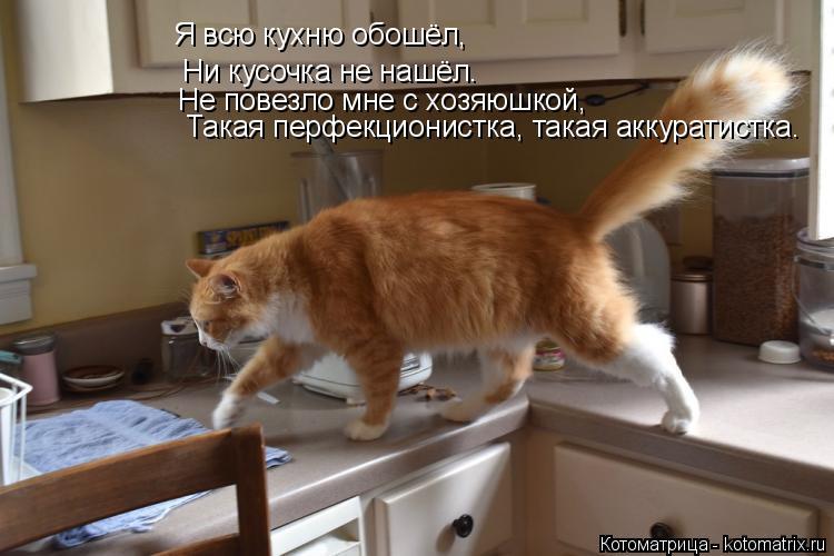 Котоматрица: Я всю кухню обошёл, Ни кусочка не нашёл. Не повезло мне с хозяюшкой, Такая перфекционистка, такая аккуратистка.