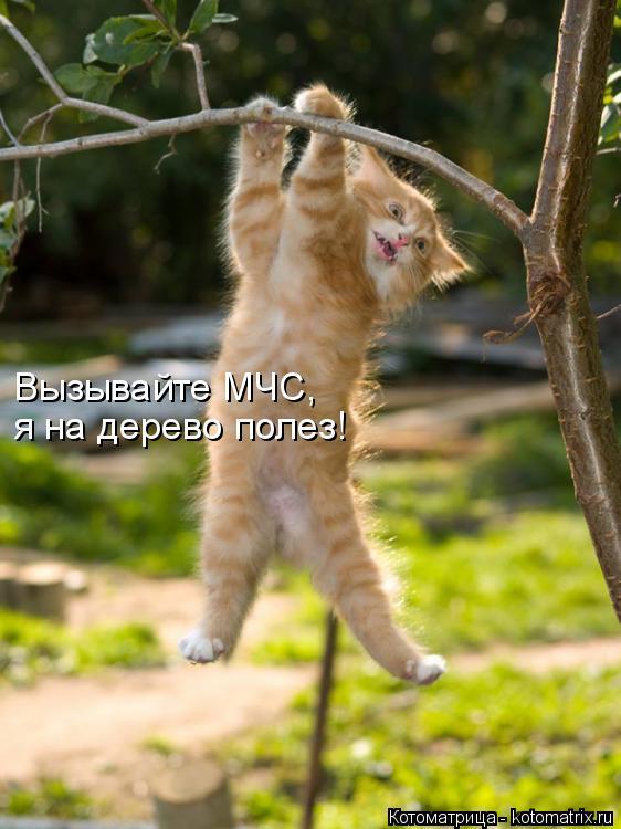 Котоматрица: Вызывайте МЧС, я на дерево полез!