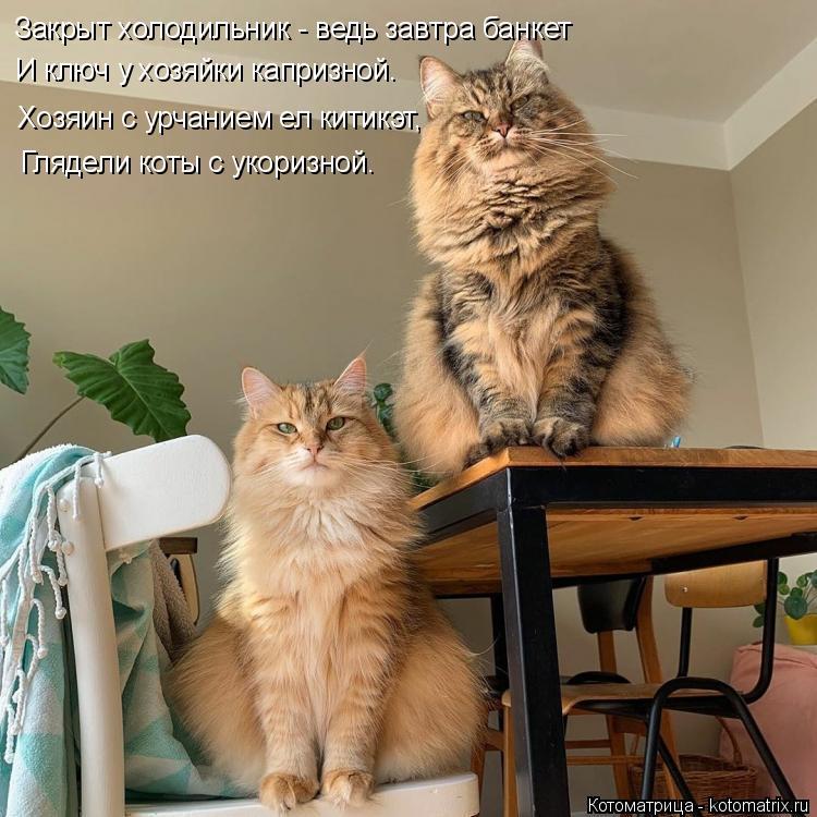 Котоматрица: Закрыт холодильник - ведь завтра банкет И ключ у хозяйки капризной. Хозяин с урчанием ел китикэт, Глядели коты с укоризной.