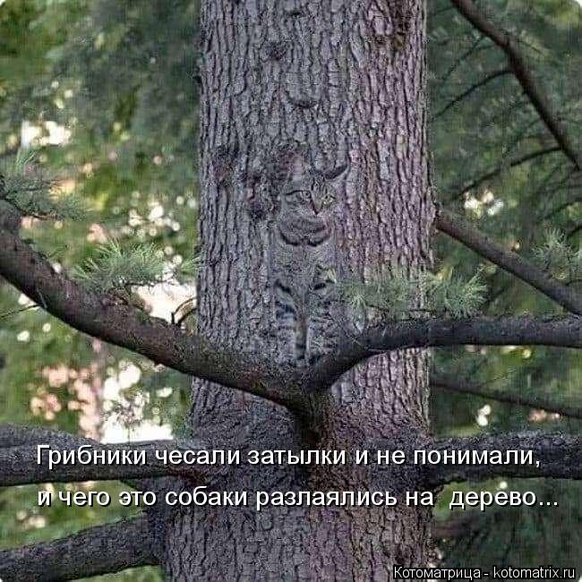 Котоматрица: Грибники чесали затылки и не понимали, и чего это собаки разлаялись на  дерево...