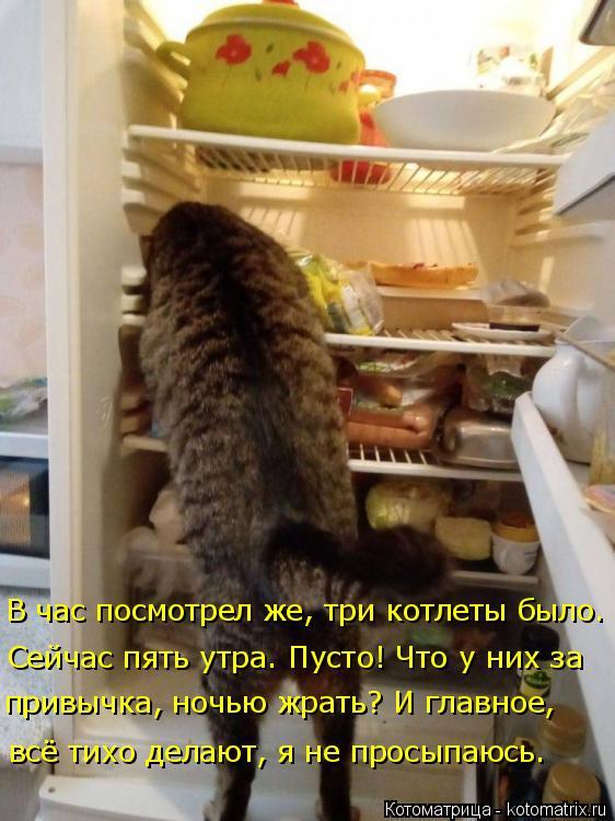 Котоматрица: В час посмотрел же, три котлеты было. привычка, ночью жрать? И главное,  Сейчас пять утра. Пусто! Что у них за  всё тихо делают, я не просыпаюсь.