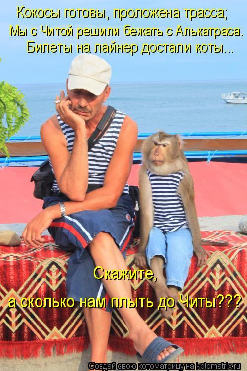 Котоматрица: Кокосы готовы, проложена трасса; Мы с Читой решили бежать с Алькатраса. Билеты на лайнер достали коты... Скажите, а сколько нам плыть до Читы??