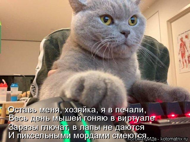 Котоматрица: Оставь меня, хозяйка, я в печали, Весь день мышей гоняю в виртуале Заразы глючат, в лапы не даются И пиксельными мордами смеются...