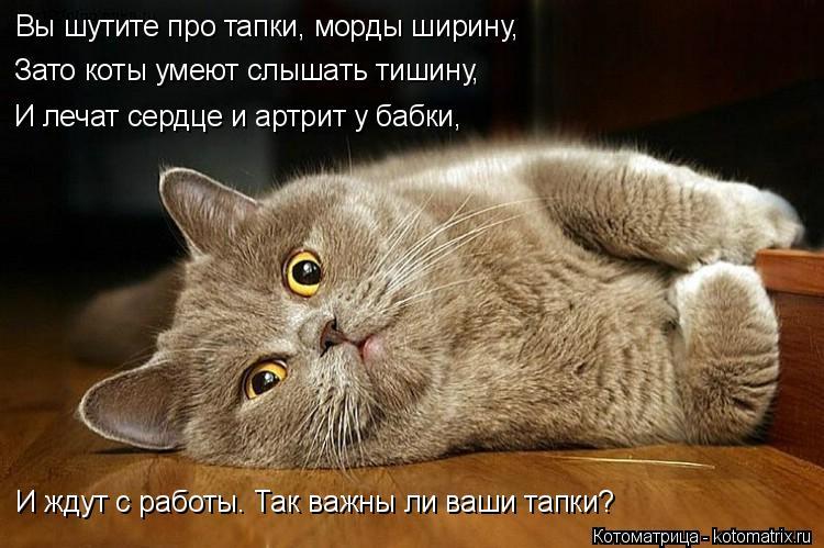 Котоматрица: Вы шутите про тапки, морды ширину, Зато коты умеют слышать тишину, И лечат сердце и артрит у бабки, И ждут с работы. Так важны ли ваши тапки?