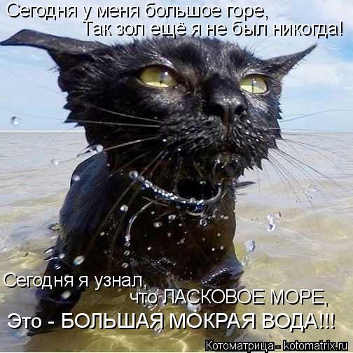 Котоматрица: Сегодня у меня большое горе, Так зол ещё я не был никогда! Это - БОЛЬШАЯ МОКРАЯ ВОДА!!! Сегодня я узнал,  что ЛАСКОВОЕ МОРЕ,