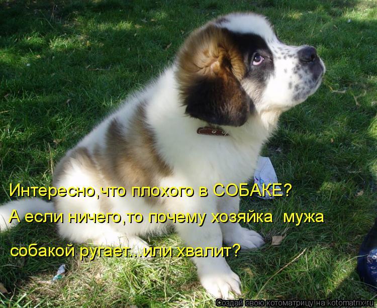 Котоматрица: Интересно,что плохого в СОБАКЕ? А если ничего,то почему хозяйка  мужа  собакой ругает...или хвалит?